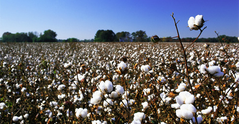 img-cotton03